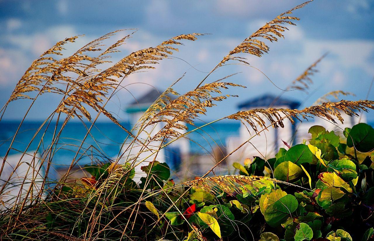 Gulf Coast Florida Beach with swaying brown grass